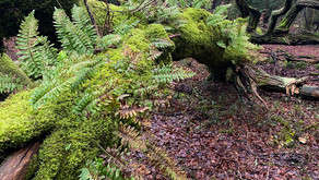 Fallen trees and epiphytic ferns