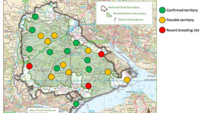 Wild New Forest 2020 Raven survey – early March update