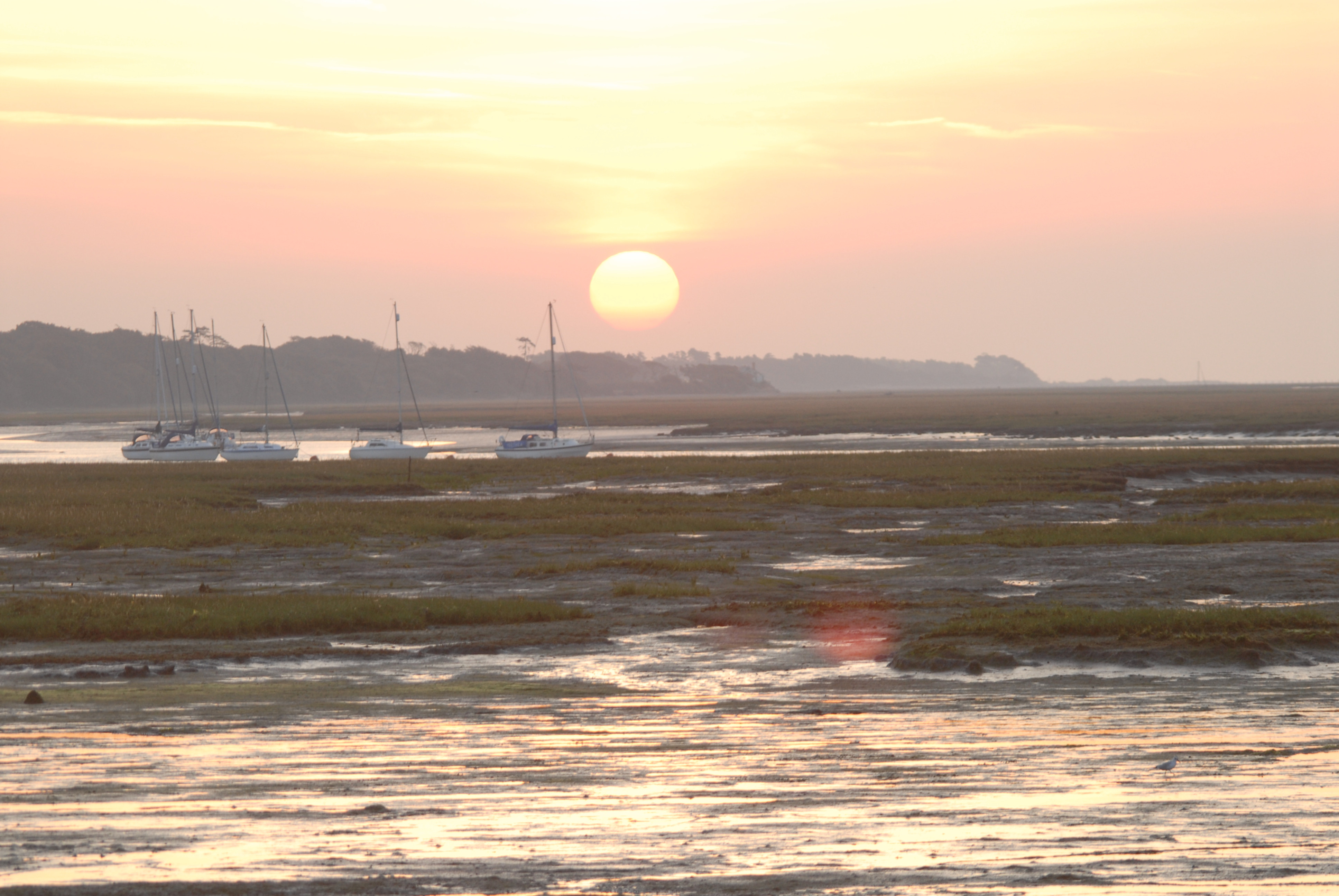 New Forest Discovery Walk (Lymington)