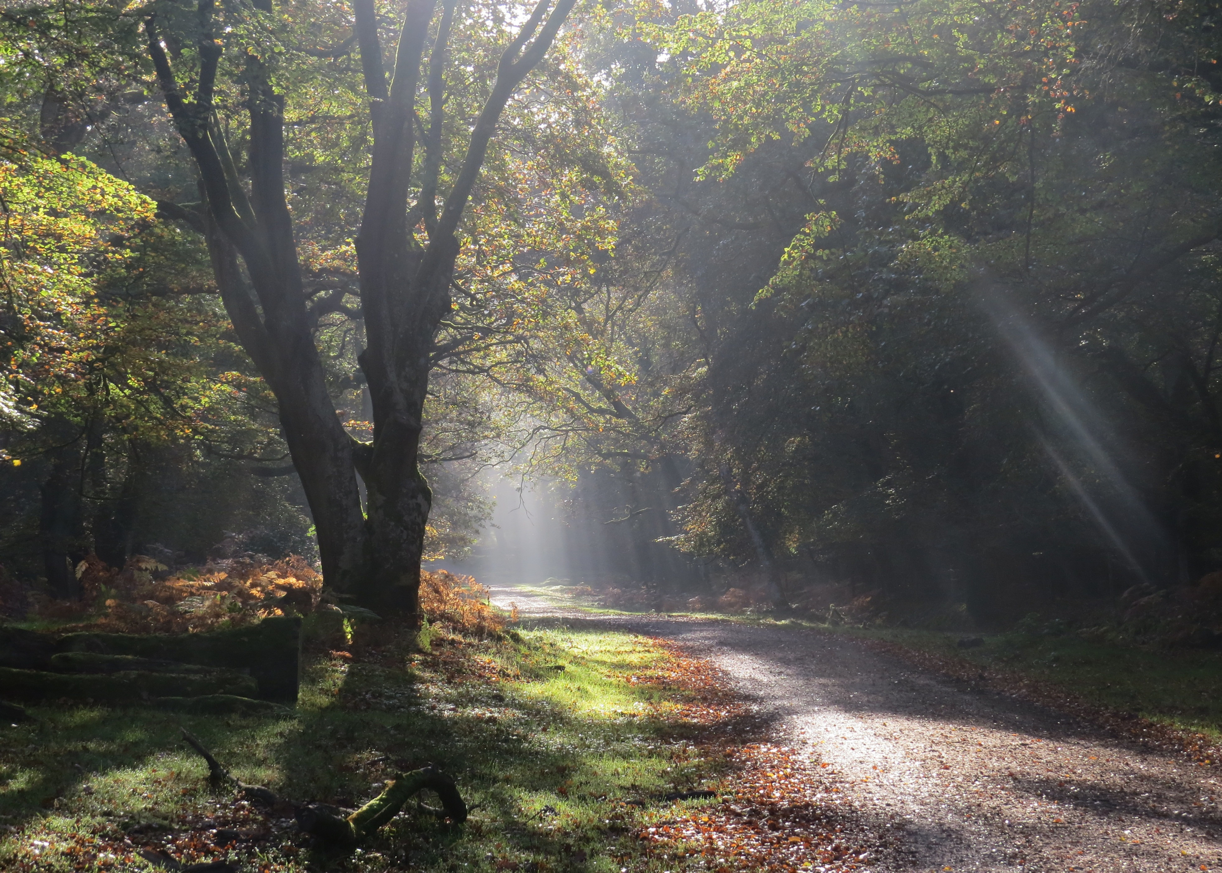 New Forest Discovery Walk (Lyndhurst)