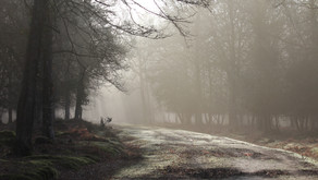 "Wild New Forest ""2020 in 2020"""