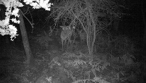 Wild Otter caught on camera in the New Forest!