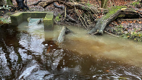 Sewage discharges into New Forest rivers (Dec 2020 update)