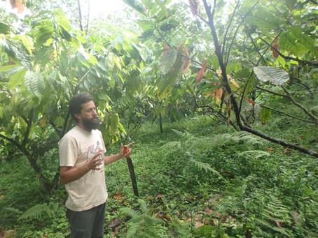 マシュピ農園物語:カカオと生命を育む森