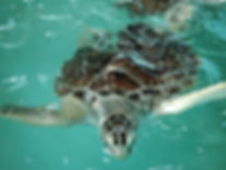 Sea Turtle  | Kuala Lumpur Day Tour