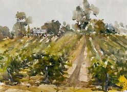 Among the Vines, Barossa Valley