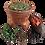 Thumbnail: Maya šampon (250 ml)