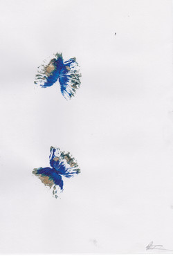 day 6 butterflies