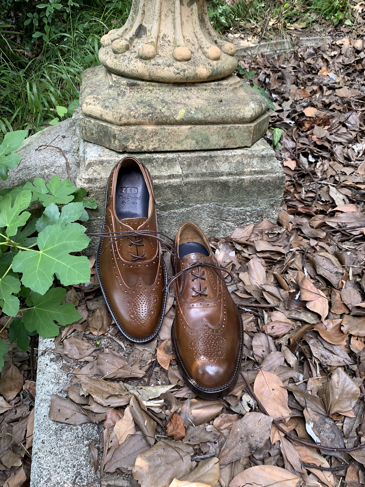 Ivy wood shell cordovan Oxford 4
