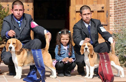BEAGLES DEL IMPERIO CANINO