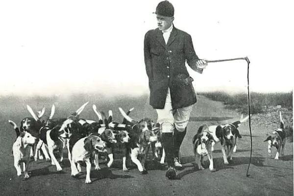 Historia Beagles