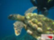 turtle upside down.jpg
