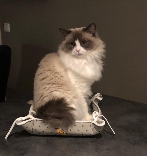 Miss Kitty.jpg