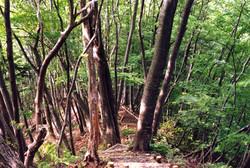 スポット(大月の森公園・遊歩道)