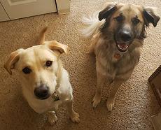 Moxie & Nala
