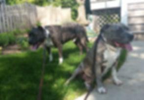 Charlotte & Dozer ready for a walk!