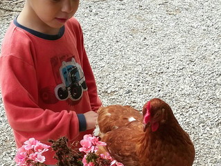 Kids and Chickens