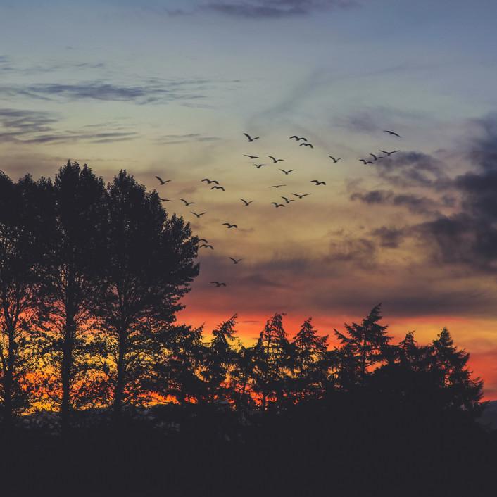 sunset birds 1.JPG