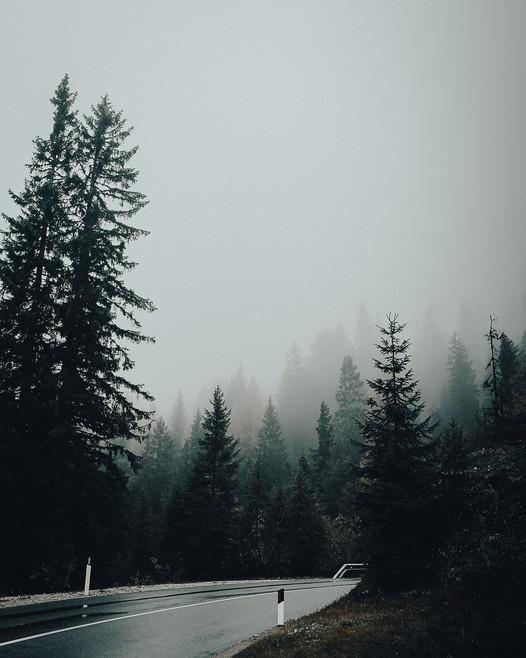 Foggy_Forest.jpg