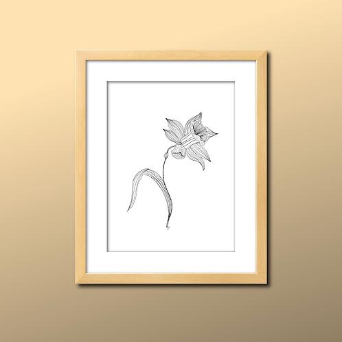 Daffodil Line Print