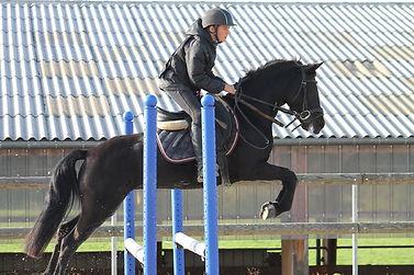 cours chevaux cusy écuries des blés d'or savoie haute savoie