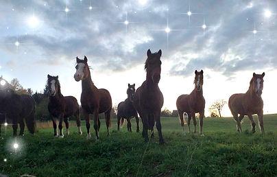 Cours poneys écuries des blés d'or savoie haute-savoie