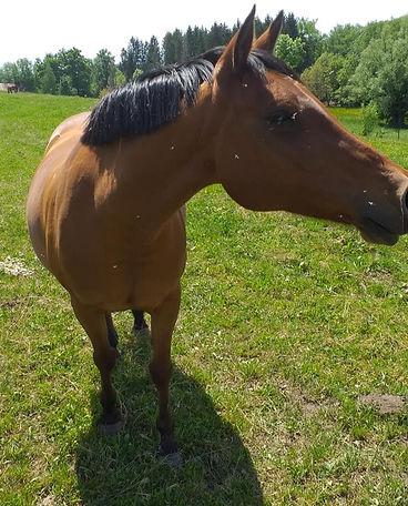 centre équestre savoie haute-savoie ecuries des blés d'or poney