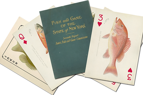 S.F Denton Game Fish of New York Art Card Deck