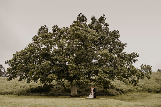 newlyweds have picture under tree
