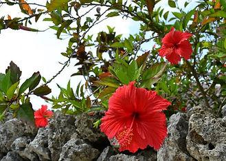 沖縄.jpg