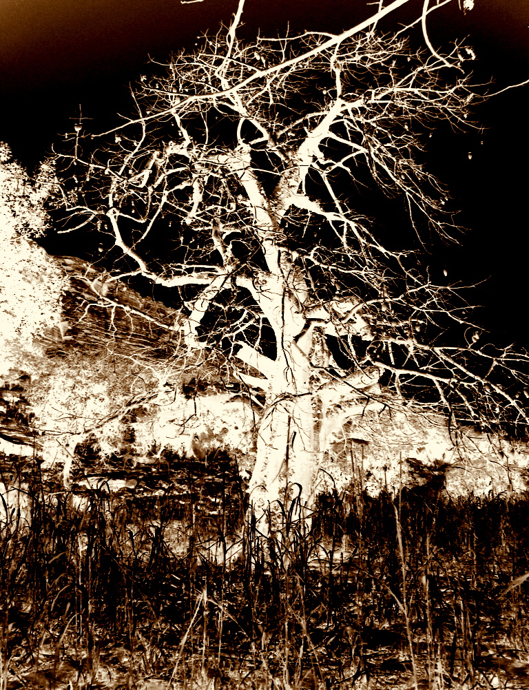 22. Der Affenbrotbaum unter dem Sturm. Fototransfer. 20x15cm