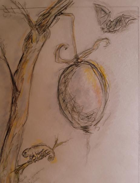 13. Unbekannte Frucht. Studie
