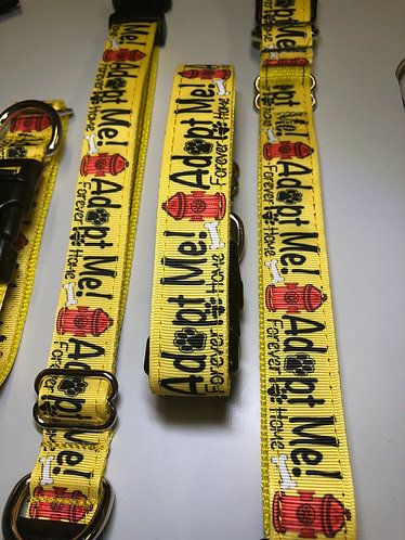 10 pack tag collar special