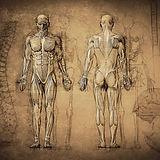 Anatomy%20Drawing_edited.jpg