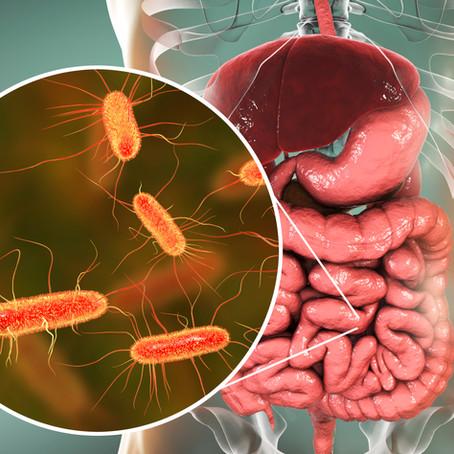 Microbioma Intestinal: Papel na Saúde e Doença