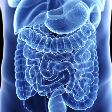 Mitos sobre a Saúde intestinal