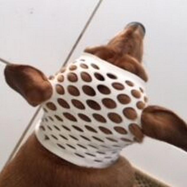 扭邊得治彈性繃帶-網狀-狗狗頭部