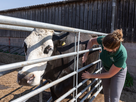 COW PHYSIO?
