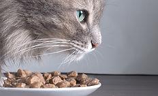 El gato y la Alimentación