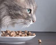 Aliments pour chats et