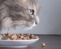 Katze und Lebensmittel