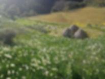 江月水仙.jpg
