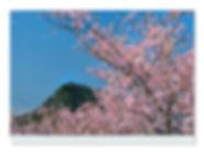 桜大黒山.jpg