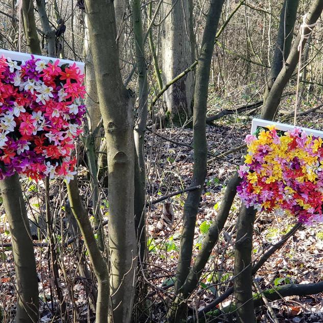 Flowers in woodland 2.jpg