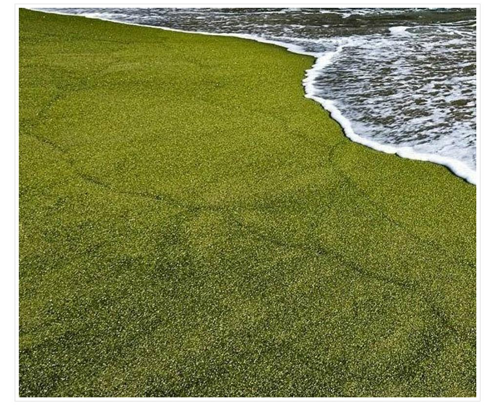 Papokeolea Beach, Hawaii (Green Sand Beach) Olivine crystal beach