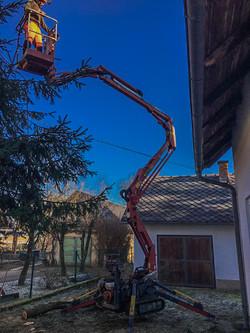 Baumentfernung Hoi