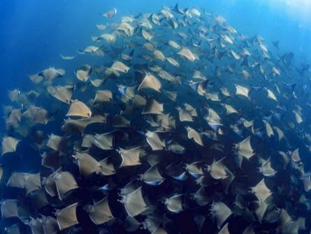 Ocean Migrations