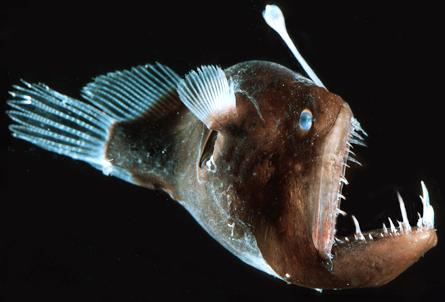 The Terrifying Anglerfish