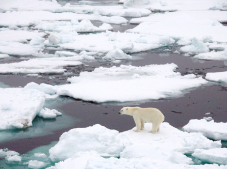 The Importance of Sea Ice