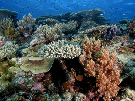 Coral polyps: building blocks of the coral reef